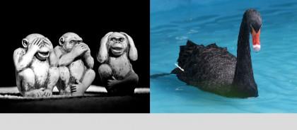Black Svan Ugly Monkeys